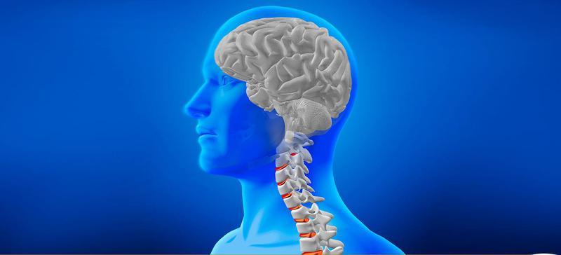 Curso de anatomía de cabeza y cuello - Edutin University